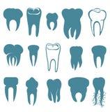 set tänder för human Royaltyfri Bild