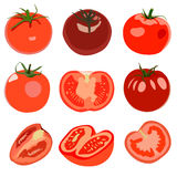 Set of Tomato. Stock Images