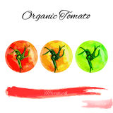 Set of tomato watercolor vector illustration isolated on white background Royalty Free Stock Photo
