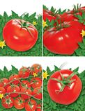 Set of tomatoes Royalty Free Stock Photography