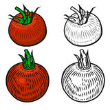 Set of tomatoes isolated on white background. Design elements. For logo, label, emblem, poster, menu. Vector illustration royalty free illustration
