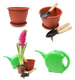 Set of tools for gardening and hyacinth in a pot Royalty Free Stock Image