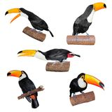 Set of Toucans Royalty Free Stock Photo