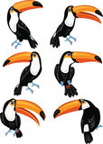 Set of toucans Stock Photos