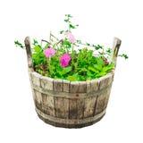 Set trädgårds- blommor i trähink Arkivbilder
