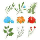 Set of traditional and tropical flowers vector illustration