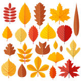 Set of tree autumn leaves isolated on the white Stock Image