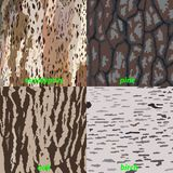 Set of tree bark - eucalyptus, oak, pine, birch for background, isolated. Vector illustration royalty free illustration