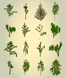 Set Tree. Element for design. Vector Royalty Free Stock Photography