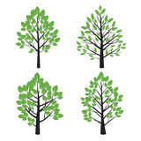 Set of Tree and Green Leafs. Royalty Free Stock Image
