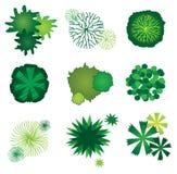 Set of Tree Icons for Garden Plan Design