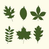 Set of tree leaves shapes. A set of six different tree leafs green silhouettes. vector illustration Stock Photo