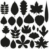 Set of tree leaves. Silhouette icons Stock Photos