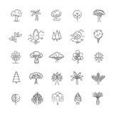 Set of Tree shape Vector Line Icons Royalty Free Stock Photo
