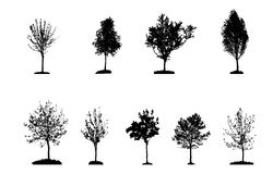 Set of Tree Silhouette Isolated on White Royalty Free Stock Photos