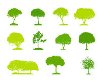 Set of Tree Silhouette Isolated on White Stock Image