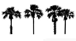 Set of tree silhouette on white background Royalty Free Stock Photography