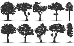 Set of tree silhouette Royalty Free Stock Image