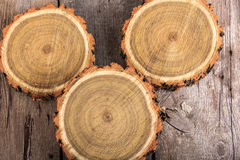 Set of tree stumps round cut with annual rings Royalty Free Stock Photo