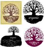 Set of Tree symbols Royalty Free Stock Photography
