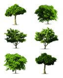 Set tree. Vector Stock Images