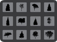 The set of trees Stock Photos