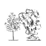 Set of trees. Black and white in silhouettes.  Royalty Free Stock Photo