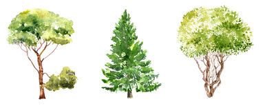 Set of trees drawing by watercolor. Fir, pine and bush, isolated natural elements, hand drawn illustration Royalty Free Stock Photos
