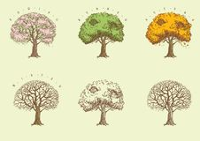 Set of trees at engraving style. Stock Photos
