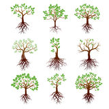 Set of Trees, Green Leafs and Roots Stock Photo