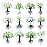Set of Trees, Green Leafs and Roots Stock Photography