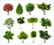 Set of trees isolated. Vector Stock Photos
