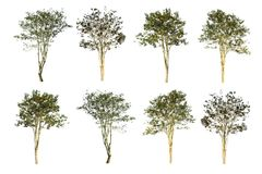 Set of 8 trees isolated on white background.  Stock Photography