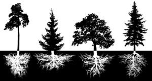 Set of trees with roots, vector silhouette. stock illustration