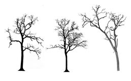 Set of trees silhouettes Stock Photo
