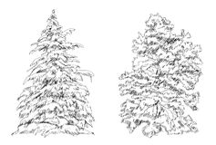 Set of Trees. Sketch collection Royalty Free Stock Photos