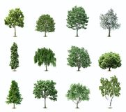 Set Trees. Vector Royalty Free Stock Photos