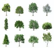 Set Trees. Vector Royalty Free Stock Photos