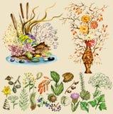 Set trockene Blumensträuße und natürliche Elemente Stockfoto