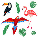 Set of tropical birds and palm leaves Stock Photo