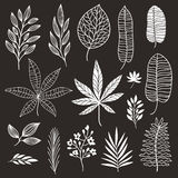 Set of tropical black-and-white leaves Royalty Free Stock Photos