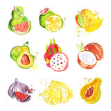 Set of tropical colorful watercolor fruits vector Illustrations. On a white background Royalty Free Stock Photo