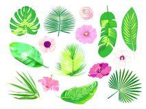 Set of tropical exotic plants. Palm leaves & flowers. Vector.