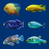 Set of tropical fish. Royalty Free Stock Photography