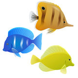 Set of tropical fish Royalty Free Stock Images