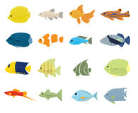 Set of Tropical Fish on white background Stock Photos