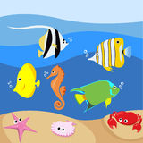 Set of tropical fishes Stock Photos