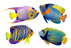 Set of tropical fishes, vector illustration Stock Photography