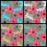 Set of tropical floral seamless patterns Stock Photography