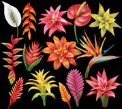 Set of Tropical Flowers vector illustration
